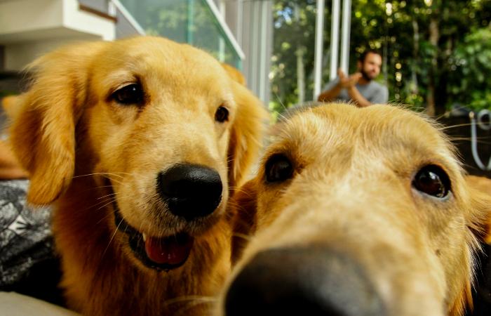 Cachorro também gripa, e pode ficar muito, muito mal - Shilton Araujo/Esp. DP