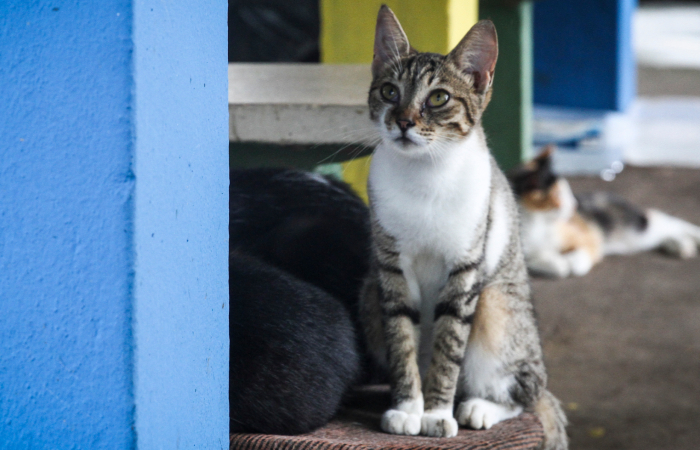 Gatos também sofrem com clima frio - Bruna Costa/Esp. DP