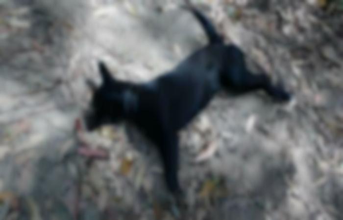 Pretinha, assim era chamada por moradores a cadelinha morta em Caeté. Ativista e ONG se juntaram para repercutir o fato (WhatsApp/Cortesia)