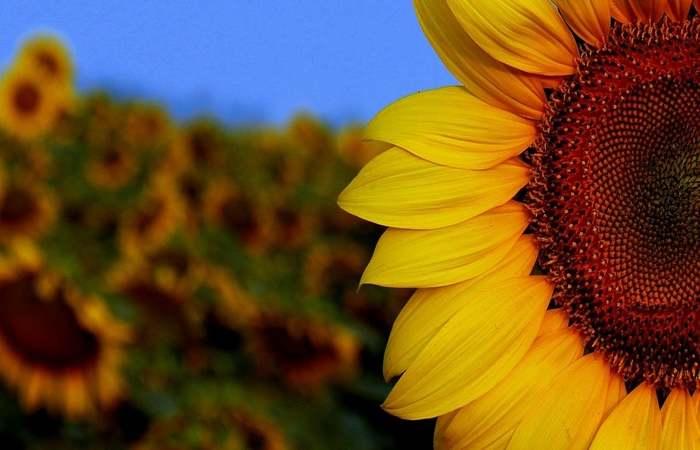 Depressão sem Tabu, iniciativa do movimento mundial Setembro Amarelo. Foto: Reprodução/Pixabay (Foto: Reprodução/Pixabay)
