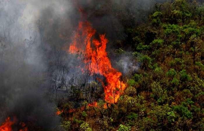 Queimadas na Amazônia chegam a um nível recorde em 2019. Foto: Agência Minas