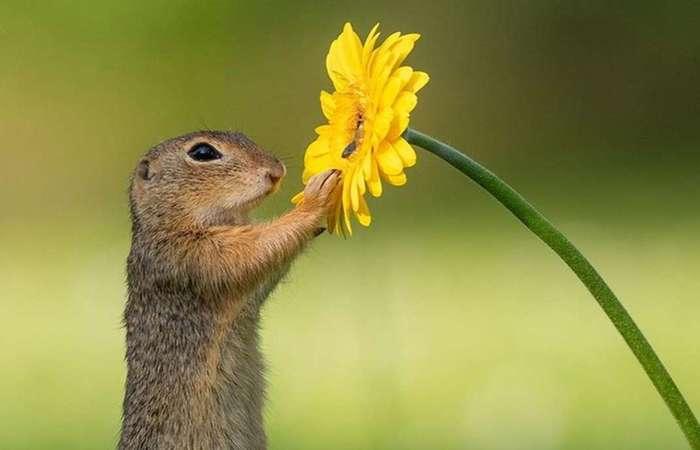 Esquilo fotografado por Dick van Duijn viraliza nas redes sociais - Créditos: Reprodução/Instagram.