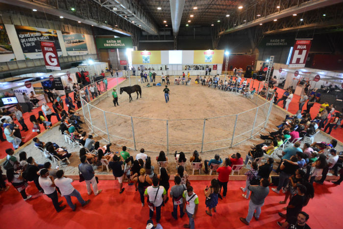 Doma gentil de equinos é uma das atividades oferecidas. Foto: Divulgação.