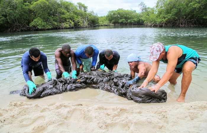 Mancha com cerca de 200 quilos foi retirada do manguezal. Crédito: Léo Domingos/PMCSA/Divulgação