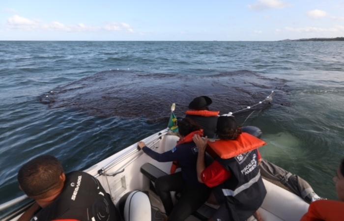 Técnicos da Prefeitura de Jaboatão dos Guararapes estão fazendo o acompanhamento da mancha de óleo que se aproxima das praias. Crédito: Matheus Brito/PMJG Divulgação