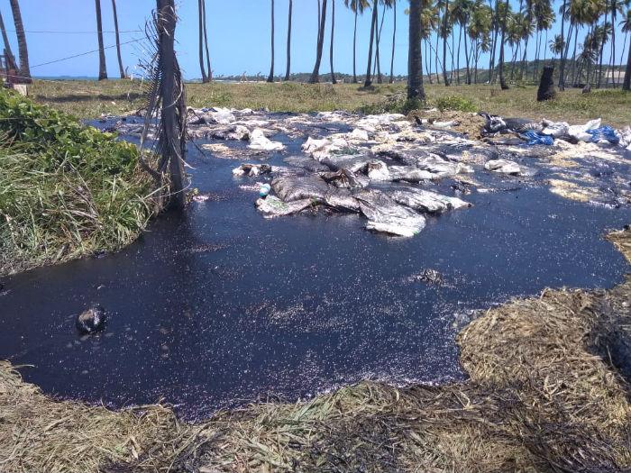 Material removido da areia da Praia do Paiva e levado para a área de vegetação. Foto: Tânia Passos/DP.
