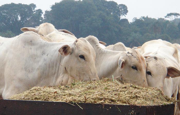 Os EUA suspenderam a compra de carne bovina in natura do Brasil em meados de 2017, na esteira da operação Carne Fraca, que revelou um esquema de adulteração do produto vendido no mercado interno e externo. (Foto: FMVZ/ USP)