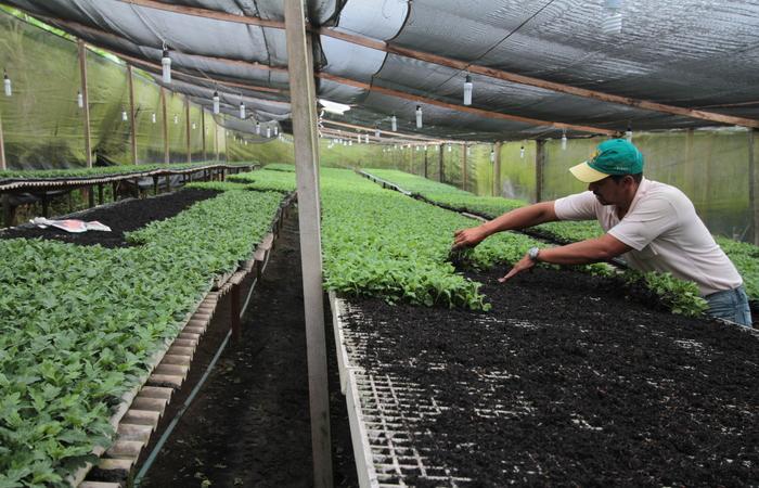 Associação comercial busca investir em novas tecnologias para o desenvolvimento do agronegócio no país  (Annaclarice Almeida/DP)