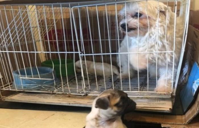 Animais viviam presos em gaiolas e foram encaminhados a lares provisórios (Foto: Divulgação/PCMG)