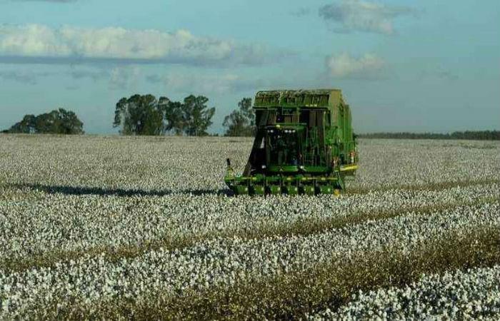 Colheitadeira em plantação de algodão: setor agropecuário deve ser o maior responsável pelo avanço da economia no terceiro trimestre do ano. (Foto: Ed Alves/CB/D.A Press)
