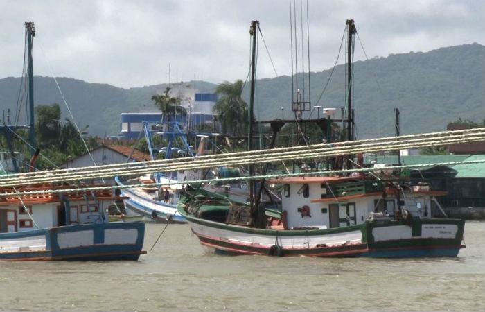 Pesca das espécias fica proibida até 15 de março (Foto: SBT Santa Catarina/Todos Direitos Reservados)