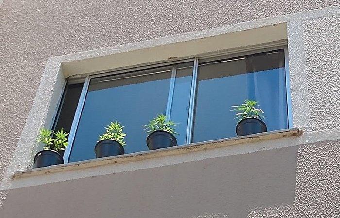 Segundo o boletim de ocorrência, a Polícia Militar chegou até o imóvel após denúncia anônima dizendo que uma moradora do condomínio estaria cultivando maconha no apartamento (Foto: Arquivo Pessoal )