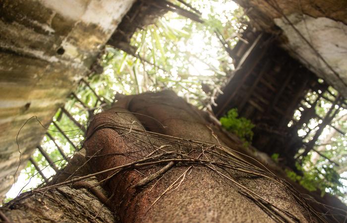 Ruínas da Casa Grande Jundiá, em Escada.  ( Foto: Samuel Calado/Esp.DP)