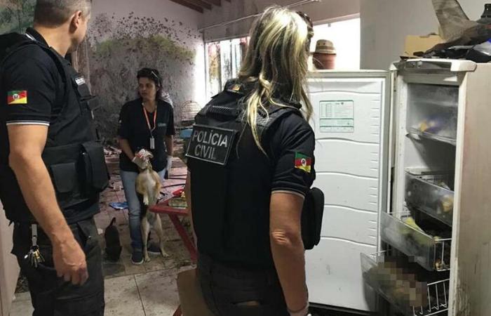 No local, 12 cães também foram resgatados com vida. Os animais estavam sem alimentação e sem água. (Foto: Polícia Civil do Rio Grande do Sul/Divulgação)