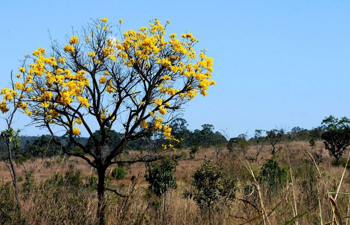 No mesmo período, a área agrícola cresceu 44,8%.  (Foto: Toninho Tavares/Agência Brasília)