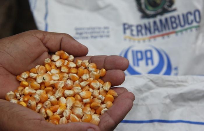 Governo distribui sementes para agricultores do Agreste e Zona da Mata |  Economia: Diario de Pernambuco