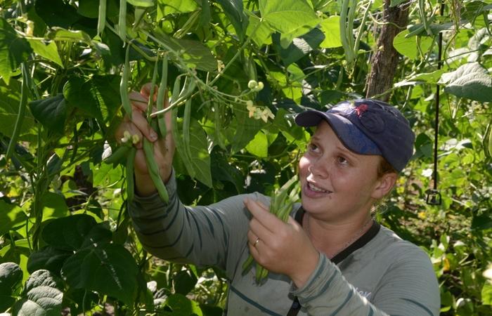Em Pernambuco, o PAA vai beneficiar 1.249 agricultores, em 144 municípios, com um valor de aproximadamente R$ 6.500 por produtor. (Foto: Josué da Mata)