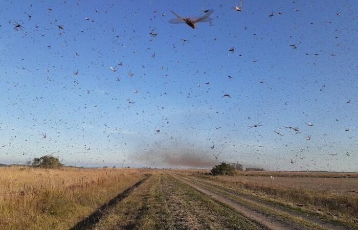 Nuvem de gafanhotos ataca lavouras na Argentina (Foto: Divulgação/Governo da Província de Córdoba)