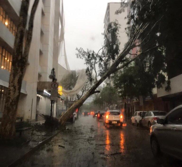 O temporal causou a queda de árvores na região (Foto: Reprodução/Twitter)