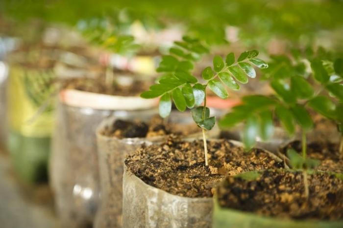 Cultivar plantas em casa pode atrair boas energias e promover o bem-estar. (Foto: Divulgação.)