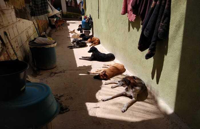 Abrigo, localizado na Mata Norte, é o lar de 163 cães  (Foto: Arquivo pessoal)