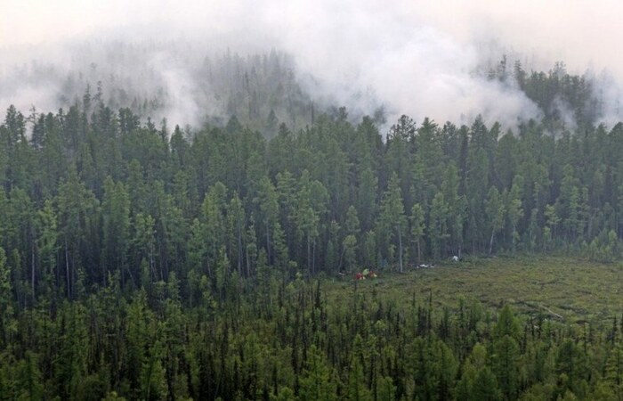 (Foto: Russian Federal Agency of Forestry/AFP))