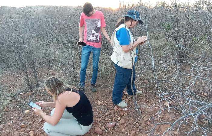 Buscas aconteceram nos últimos 15 dias, desde que meteorito caiu (Foto: Cortesia/Luiz Fernando de Castro Souza.)