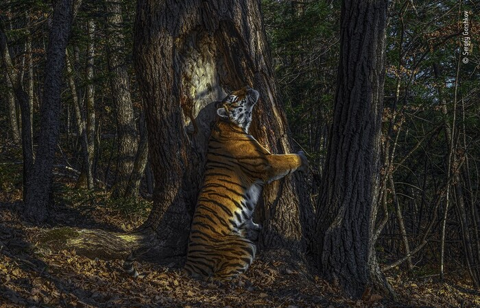 (Foto: Sergey Gorshkov/Wildlife Photographer of the Year/BBC)