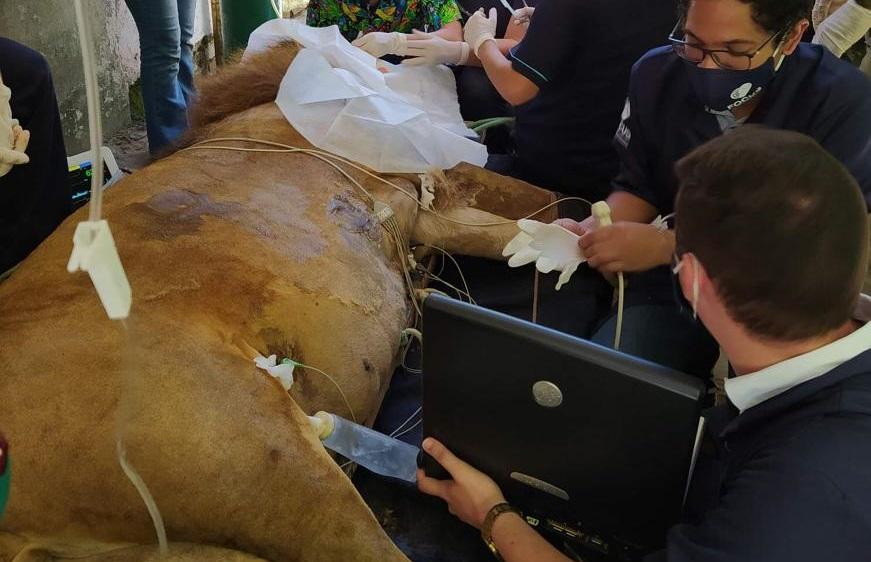 (Médicos veterinários constataram a existência de tumores na boca e na testa do animal. Ainda se aguarda o resultado dos exames patológicos. O leão passa bem. Foto: Divulgação)