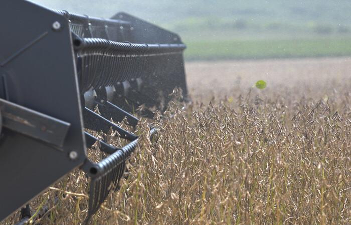 (Área de cultivo da soja aumentou 3,6%. Foto: Gabriel Jabur/Agência Brasília)