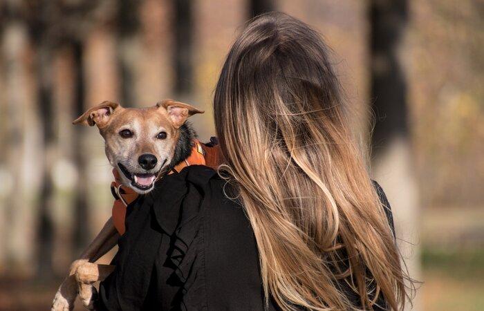 Evento terá 36 estandes com foco em alimentação, cuidados e diversos serviços veterinários voltados para cães e gatos. (Foto: Rebeccas Pictures/Pixabay)