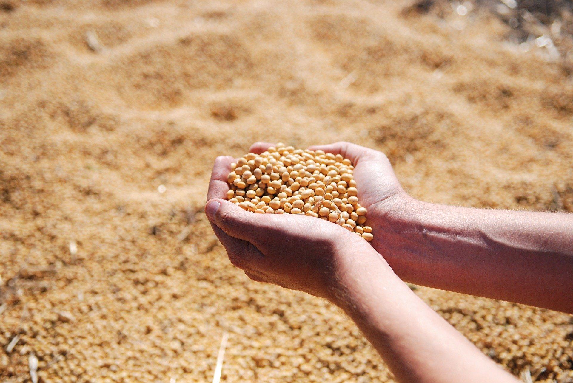 (Soja e milho respondem pela grande maioria da produção anual. Foto: Reprodução/Pixabay )