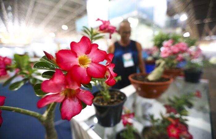Manter plantas em casa exige cuidados simples que podem ser feitos por qualquer pessoa, sem a necessidade de contratar um profissional (Marcelo Camargo/Agência Brasil)