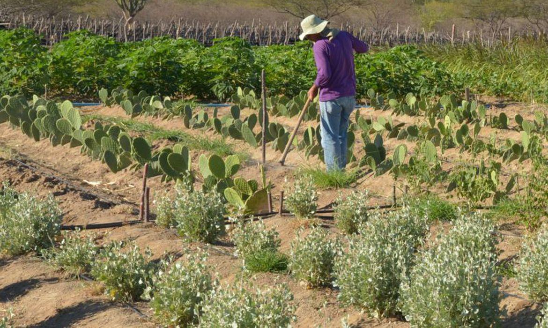 (Produto pode ajudar na agricultura no semiárido. Foto: Arquivo/Agência Brasil)