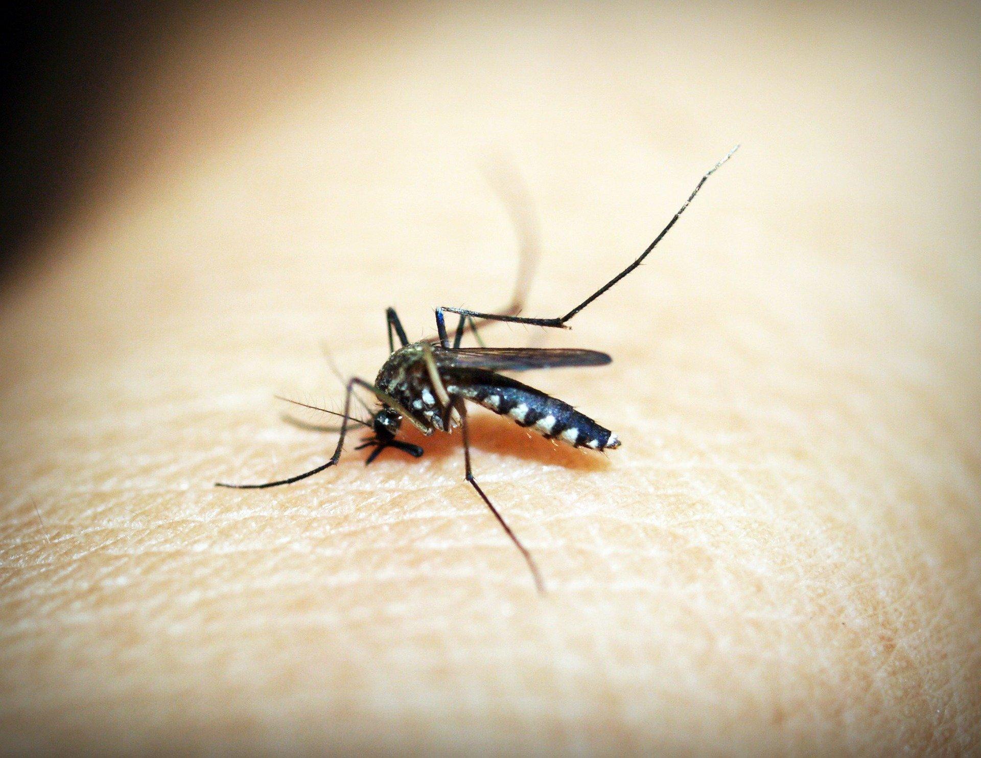 (Estado detectou o vírus em animais silvestres. Foto: Reprodução/Pixabay)