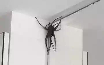 (Aranhas encontradas na Região do Buritis têm picada dolorosa. Foto: Reprodução/Facebook)
