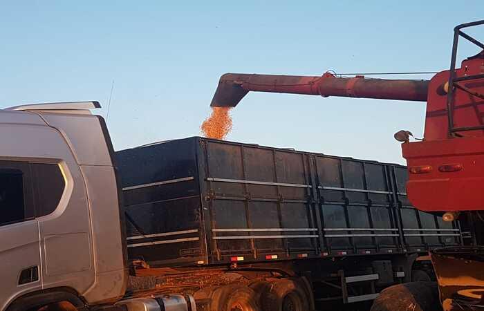 Com a iniciativa, será possível saber os locais mais adequados para a produção de milho e sorgo do estado, favorecendo a indústria de rações de aves (Divulgação)