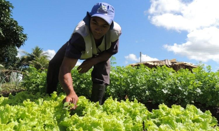 Vitória de Santo Antão foi o município que mais forneceu alface para a Ceasa. FOTO: IFPE/Divulgação
