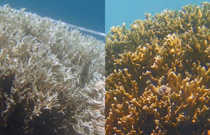 (Foto: Camila Brasil/ Reef Check Brasil)