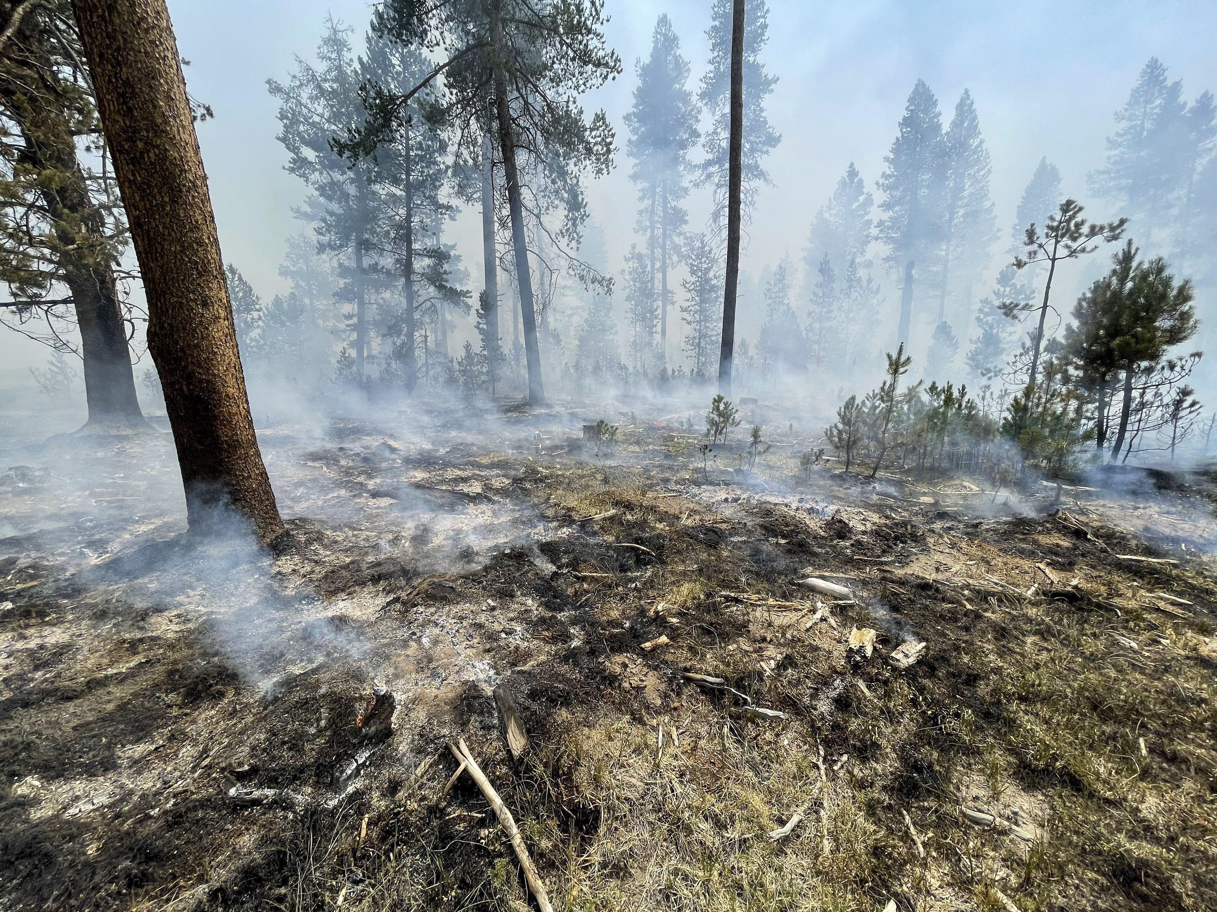 (Foto: Handout / US Forest Service / AFP)