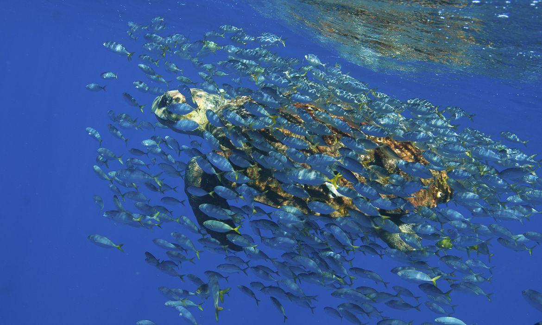 (ABC propõe criação de instituto nacional para pesquisa oceânica. Foto: Divulgação/Projeto Tamar)