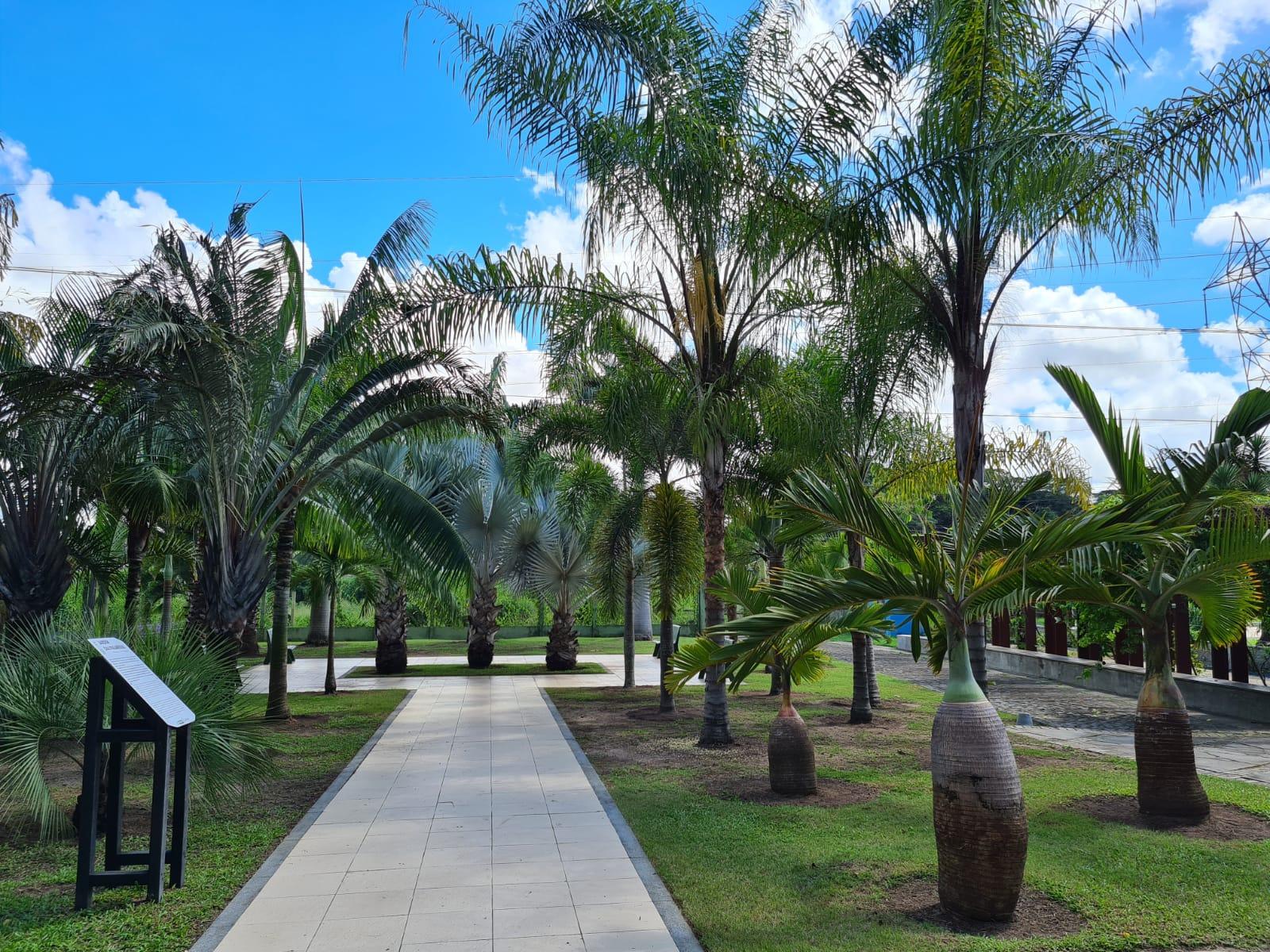 Jardim das Palmeiras conta com mais de trinta unidades de espécies da família Arecaceae, que chamam atenção dos visitantes pelo seu valor ornamental. (Divulgação)