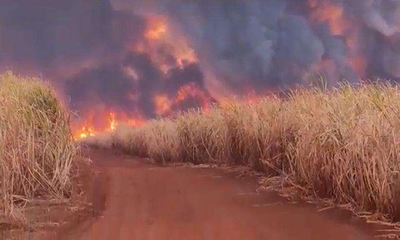 (O incêndio em Delta destruiu extensa área de plantação de cana-de-açúcar. Foto: Reprodução/WhatsApp)