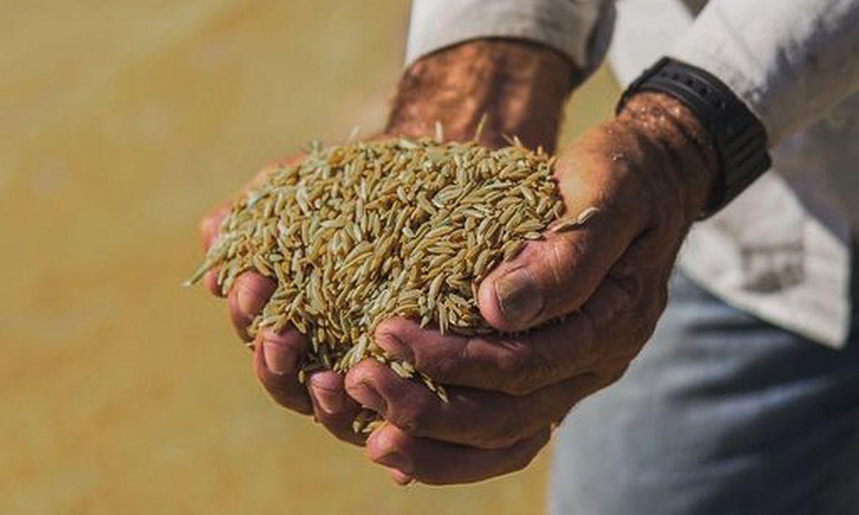 (Cultivado no Rio, produto tem consistência e sabor únicos. Foto: Reprodução/Facebook)