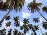Há muitas opções no litoral pernambucano (Anaclarice Almeida/DP/D.A Press)